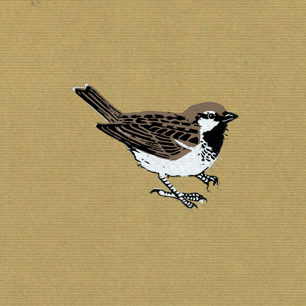 Sparrow by Nat Morley